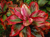 Jigsaw puzzle N12: Red plant
