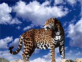 Jigsaw puzzle N40: Spotted climber
