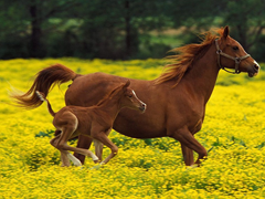 Free online Jigsaw puzzle N112: Horses in apples