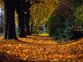 Jigsaw puzzle N13: Autumn road