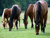 Jigsaw puzzle N24: Horse outing