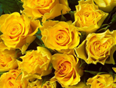 Jigsaw puzzle N42: Yellow roses