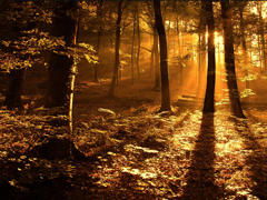 Free online Jigsaw puzzle N69: Forest sunset