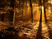 Jigsaw puzzle N69: Forest sunset