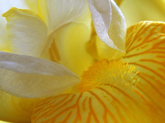 Free online Jigsaw puzzle N70: Yellow dream