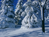 Jigsaw puzzle N80: Winter